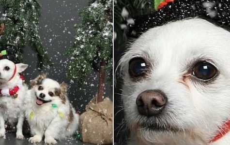 Christmas Pup Photo Goes Viral