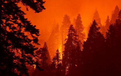 Gender Reveal Party Accident Leads to Wildfires, Heat Storms, and a Red Sky Over the West Coast