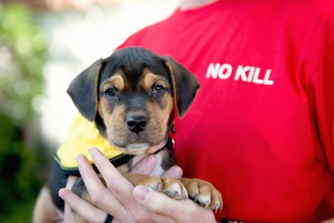 No-Kill vs. Open Admission Animal Shelters: What's the Difference?